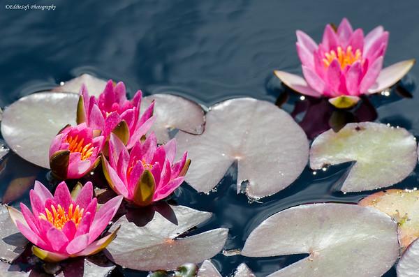 Denver Botanical Gardens June 2013