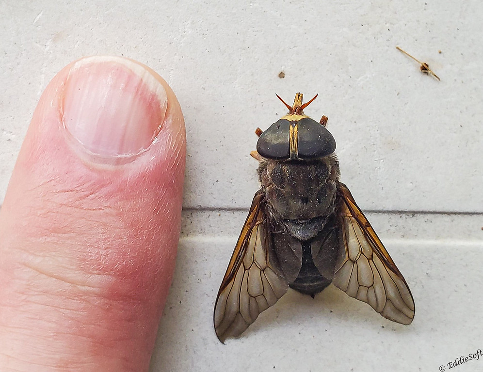 Horse Fly found on our lot