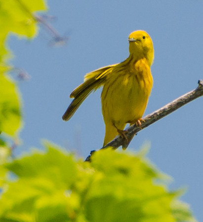 Gander Mountain Birding in Antioch IL