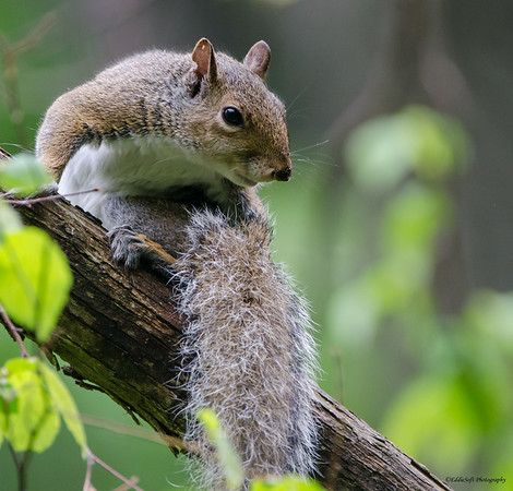 Squirrels at Starved Rock May 2015