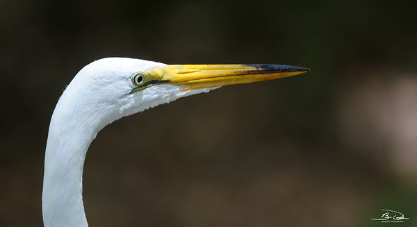 Georgia Birds, May 2015