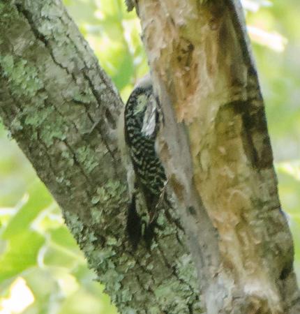 Georgia Birding May 2015
